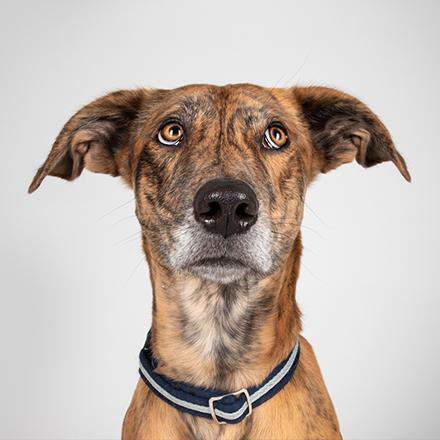 doggie-tb